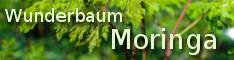 Moringa4